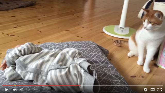 s_ネコが赤ちゃんと初対面5