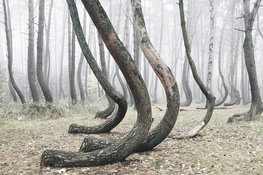 """""""し""""のような木2"""