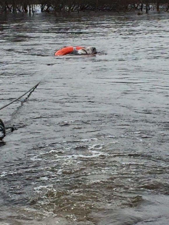 洪水から救出されたロバ4