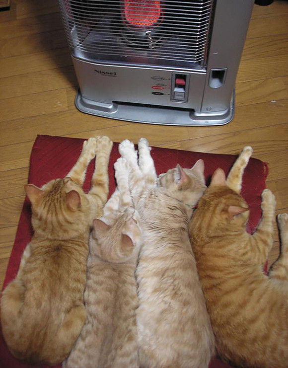 温まることが大好きネコちゃん15