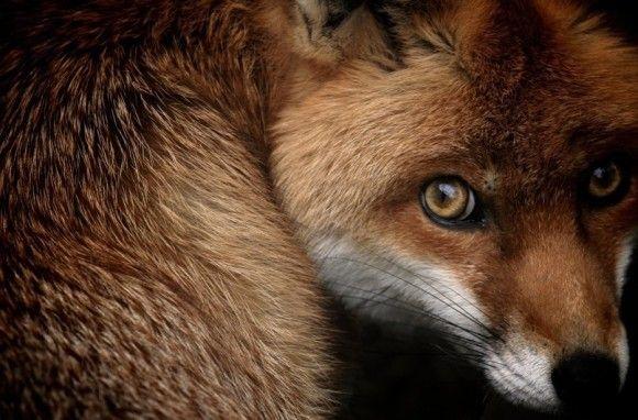 野生の動物のいい写真24