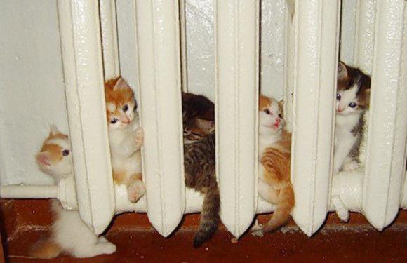 温まることが大好きネコちゃん14