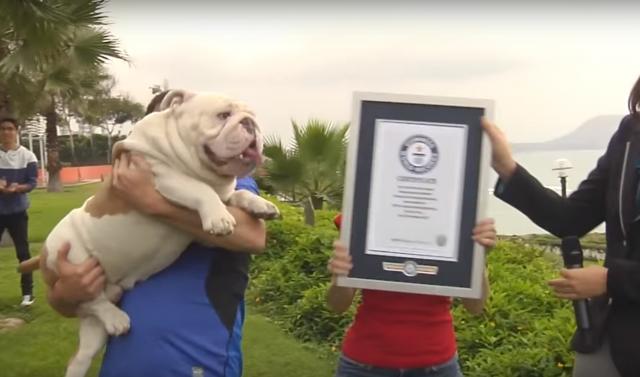 スケボーでギネス認定の犬1