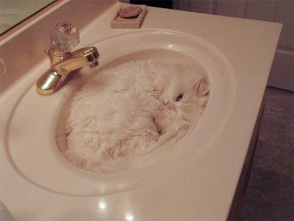 猫画像14