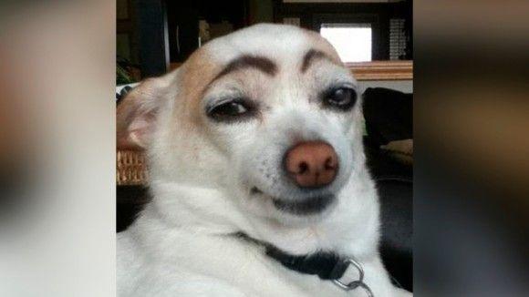 犬猫の面白画像3