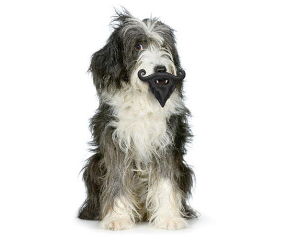 犬のおもちゃ14