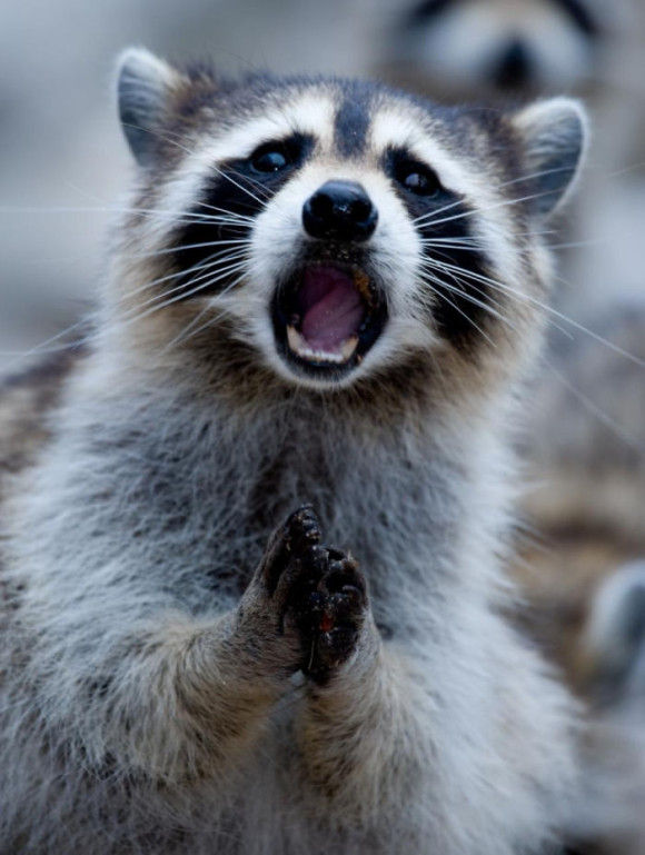 動物おもしろ画像特集!唖然としている動物画像20選
