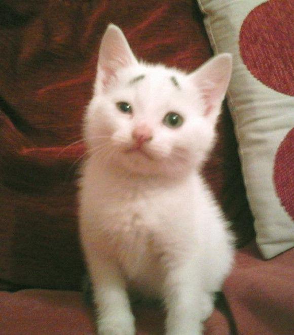 おもしろネコ画像!眉毛がキュートすぎる!