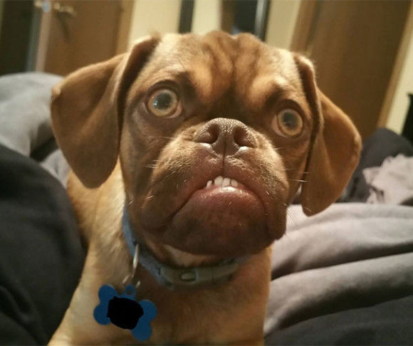 めっちゃ不機嫌な犬4