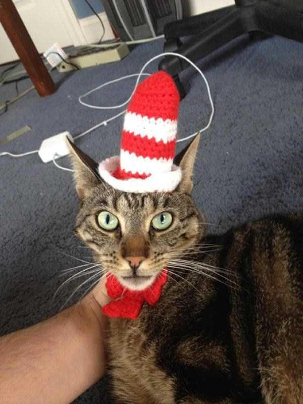 9コスチュームをした猫