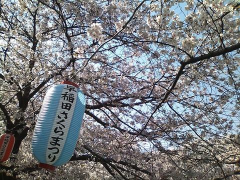sakura_waseda