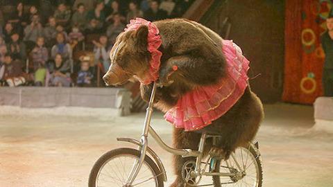 成人してるのに自転車漕げないやつwwwwwwww