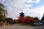 京都東寺の五重塔と紅葉