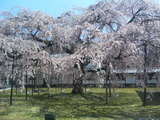 200604醍醐寺2