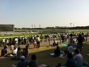 京都競馬場の馬場