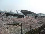 20060409阪神競馬場1