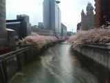 20060408目黒新橋
