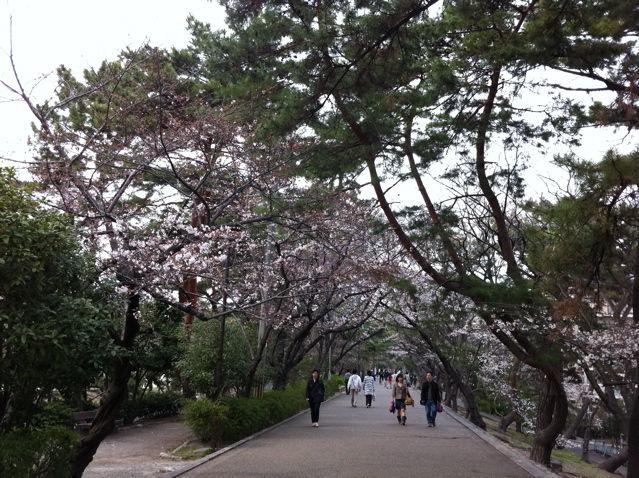 夙川沿いの遊歩道