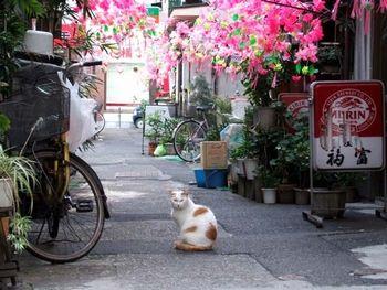 河津桜が世界一きれいだと思う