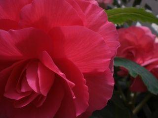花がキレイでよかった