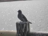 彩湖の鳥2