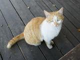 榎本の猫1