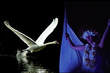 DIVA白鳥①