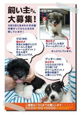 子犬ポスター