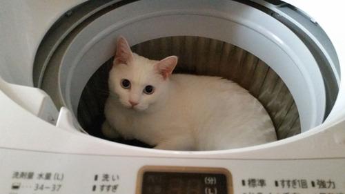 洗濯機ニャー