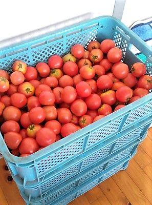 トマトのご寄付
