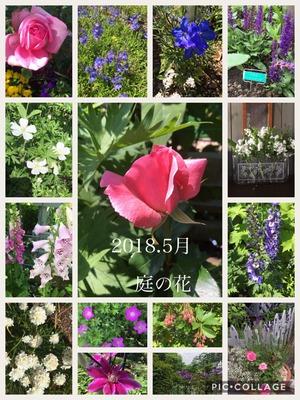 2018/5庭の花