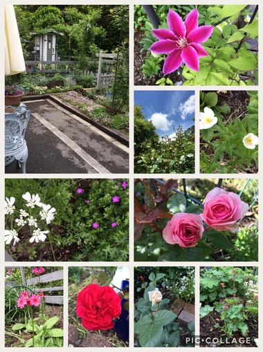 29年度の我が家の庭