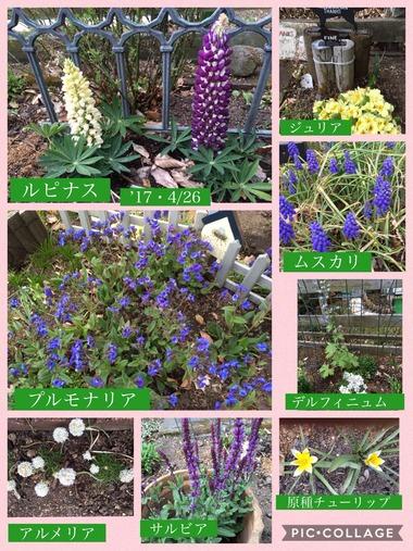 '17・4/26今日の庭