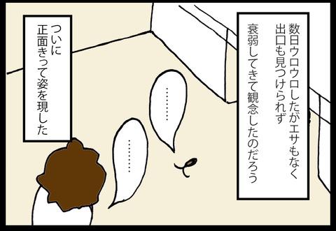 gnoito1-6