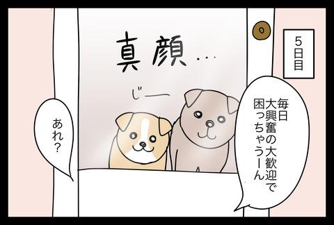 dogsitter1-3