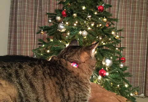 nekochanxmastree2