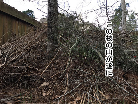 niwa20188-1