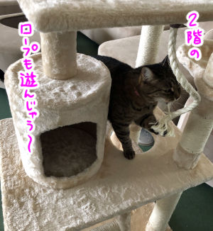 cattower2-7