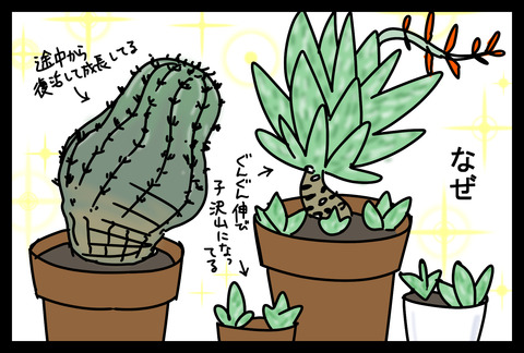 plants1-4