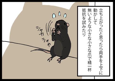 nezumi4-3