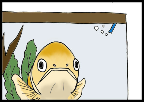 fish1-2
