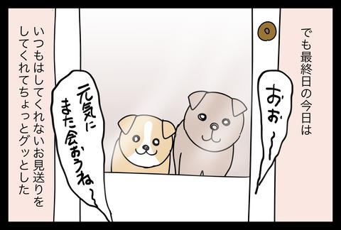 dogsitter1-5