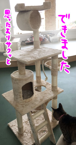 cattower2-3