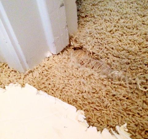 carpet2
