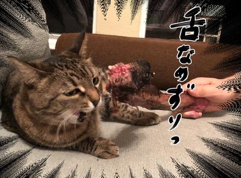 catfood1-7