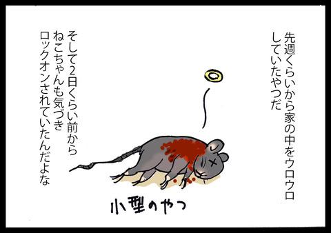 kowaikamo3-3