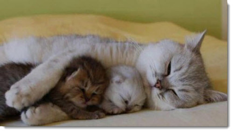 mother-baby-cats-sleeping