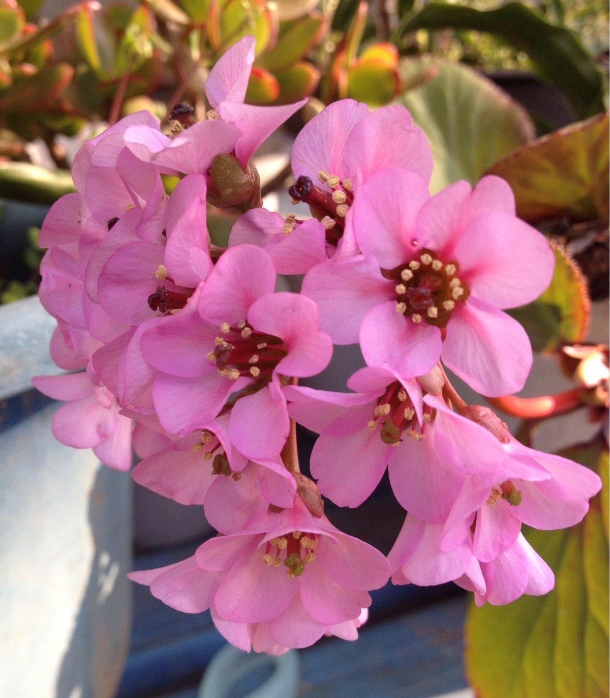 2 月 誕生 花 2月の誕生花を総まとめ!2月生まれの人に向ける花言葉や特徴をご紹介...