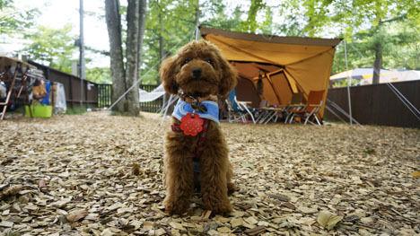 ワンコと一緒のキャンプなら、ドッグランサイトがお勧め!