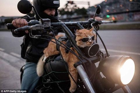 バイク買うか大型テレビ買うか猫さん飼うならどれがいい?